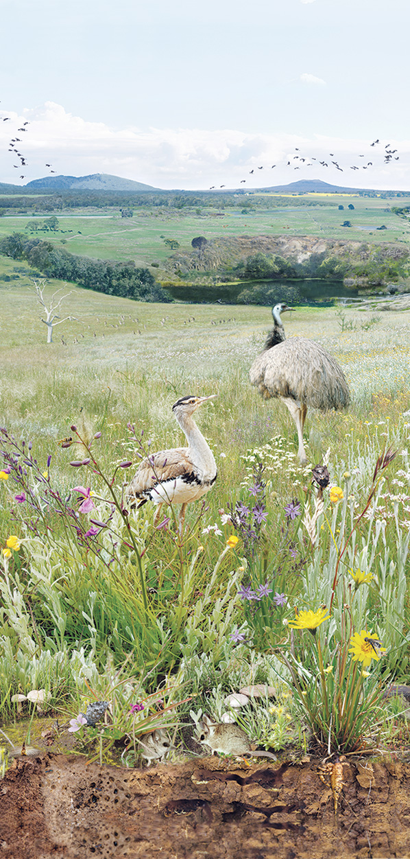Identify and Classify Grassland Plants and Animals